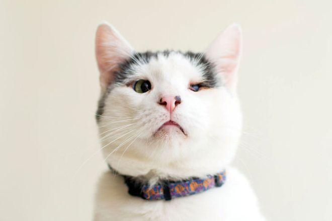 blindcats4