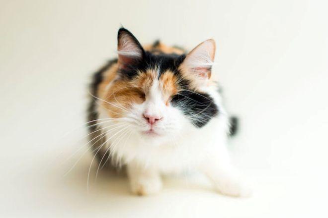 blindcats5