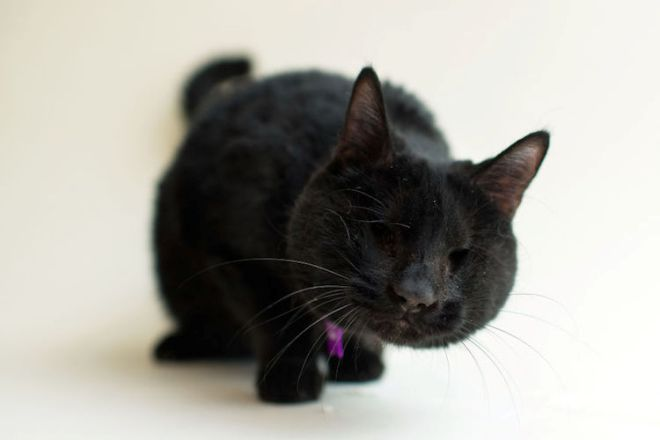 blindcats6