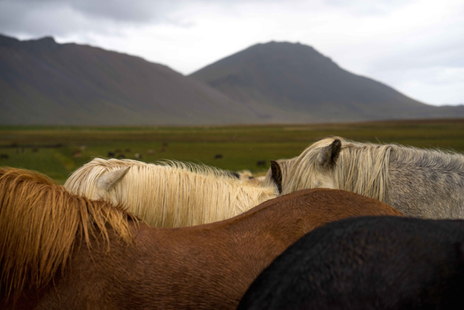 Nick-Turner-Horses-2