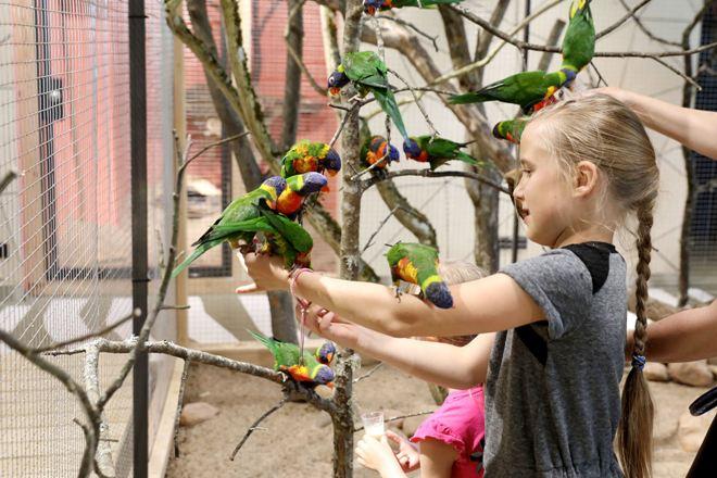 papugos