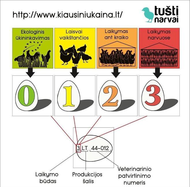 kiausiniu.infografikas