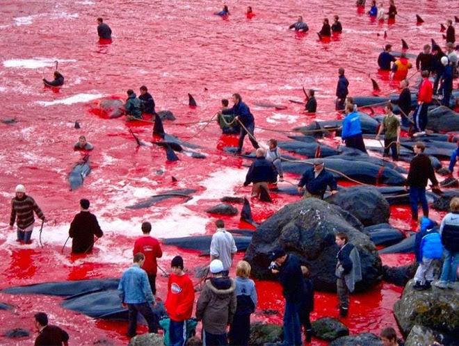 Dolphins hunting season