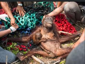 Mama Anti ir jos kūdykis / International Animal Rescue nuotr.